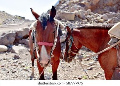 Riding tour on horses among wild beautiful nature near Glacier el Morado in Santiago, Chile