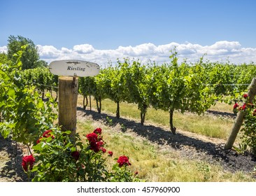 A Riesling sign with red roses below at the entrance to a vineyard in Niagara on the Lake, Canada.