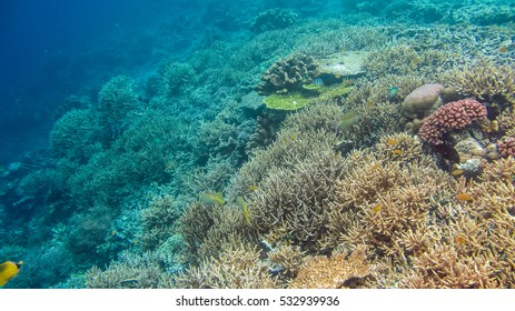 The Riff Edge covered by beautiful Corals on Kri, Raja Ampat, Indonesia