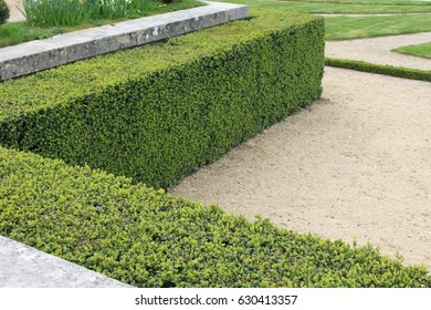 Right angle green bush that is perfectly trimmed