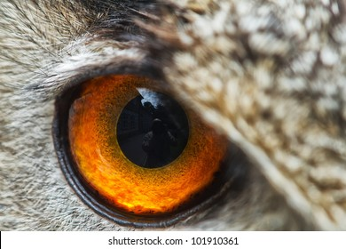 right eye of owl eagle very close up with small depth of field