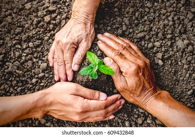 The right hand of an old woman, an old man, and a young man are planting seedlings into the soil.