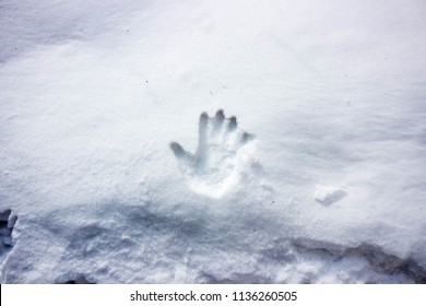 The right hand print on white thick snow in winter.
