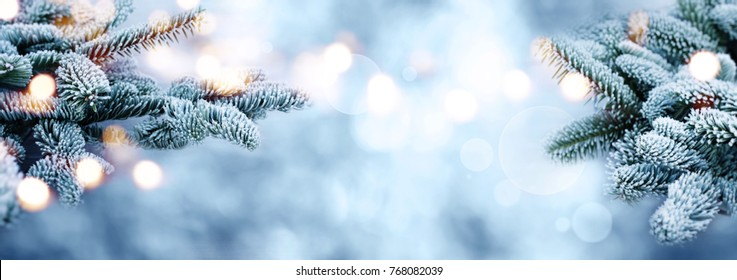 Rime covered fir branches with golden bokeh on blue sky in winter for a background