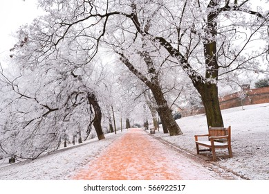 Rime covered trees in a city park with benches