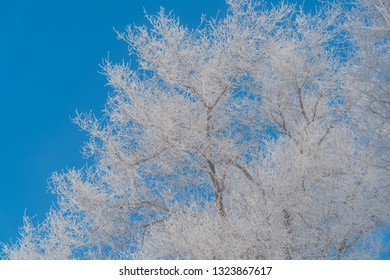 Rime Ice on tree in Wusong Island, Jilin, Heilongjiang - China