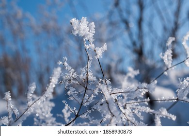 Rime on dead branches on a cold winter morning