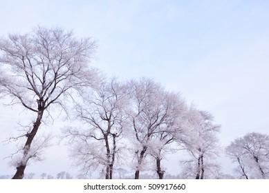 Rime on trees at rime island in winter moring,Jilin,China.
