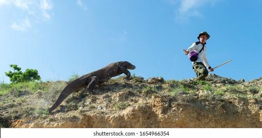 Rinca Island, Indonesia - January 10, 2019: Komodo dragons and Ranger of Komodo National Park. The Komodo dragon, scientific name: Varanus komodoensis. Natural habitat. Indonesia. Rinca Island.