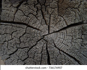 ring of tree