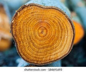 rings closeup of chopped tree trunk