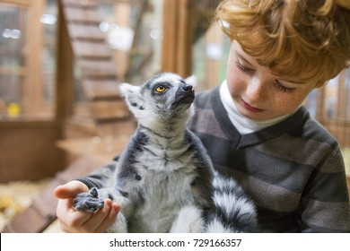 ring-tailed lemur and boy, kid and lemur in zoo