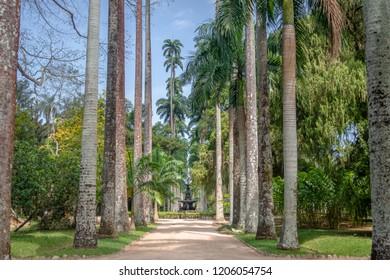 Rio de Janeiro, Brazil - Oct 29, 2017: Avenue of Royal Palm Trees at Jardim Botanico Botanical Garden - Rio de Janeiro, Brazil