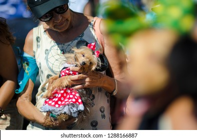 RIO DE JANEIRO - FEBRUARY 19, 2017: An owner holds a dog dressed in Minnie Mouse costume at the annual Blocao pet street party during carnival.