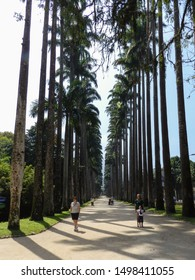 RIO DE JANEIRO, RJ, BRAZIL - SEPTEMBER 02, 2012: Trails in the middle of the Imperial Palm Trees of the Jardim Botanico (Botanical Garden).