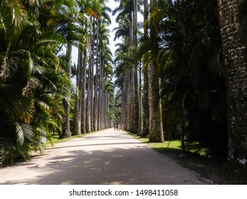 RIO DE JANEIRO, RJ, BRAZIL - SEPTEMBER 02, 2012: Trail in the middle of the Imperial Palm Trees of the Jardim Botanico (Botanical Garden).