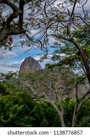 Rio de Janeiro/RJ/Brazil -01-04-2016: Sugarloaf framed by trees of Isaac Rabin Park in the Botafogo neighborhood