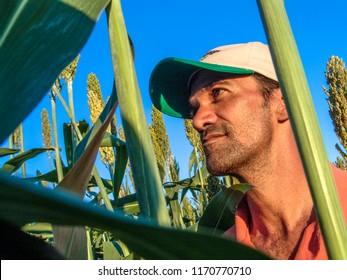 Rio Grande do Sul, Brazil, February 10, 2006. Farmer observe plants on sorghum fild