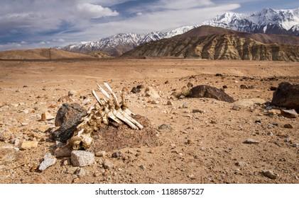 RIP BONE at Leh Ladakh extreme Land
