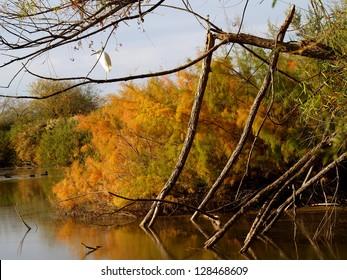 Riparian Fall Color