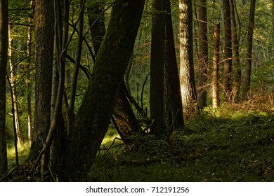riparian forest about natural- character- Europe