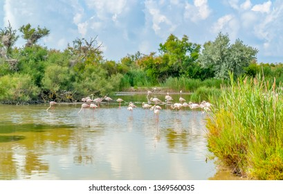 riparian scenery including some flamingos around the Regional Nature Park of the Camargue in Southern France