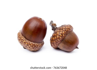 acorns images, stock photos & vectors | shutterstock