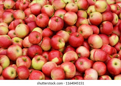 Ripe apples background