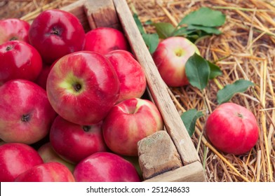 Ripe apples in a box on straw.