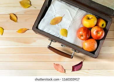 Ripe apples and knitted sweater in old suitecase on the wooden background with coloful leaves. Autumn trip. Autumn harvest. Flat lay. Copy paste