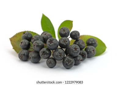Ripe aronia berries, Aronia melanocarpa, white background
