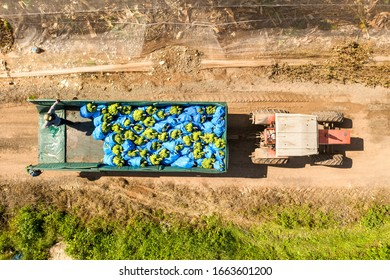 Ripe Bananas packed in blue plastic bags loaded on a Tractor trailer parked next to a greenhouse, Aerial view.
