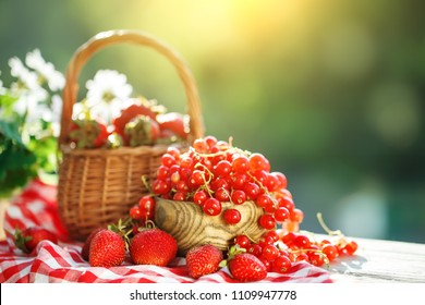 Ripe berries - red currants, strawberries, gooseberries on a wooden table in the summer garden. Harvest. Summer still life.