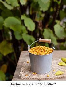 ripe berries of sea buckthorn in a bucket on a garden background. healthy vitamin autumn berries