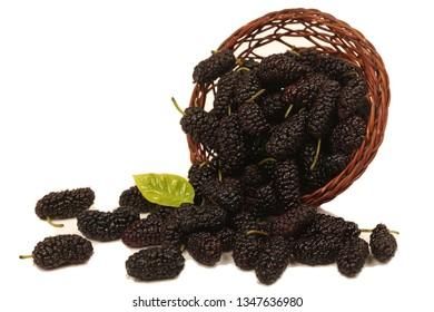Ripe berry of black mulberry