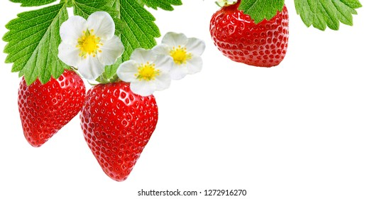 ripe best garden strawberry
