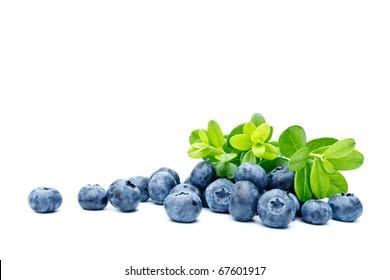 Ripe bilberries on white background