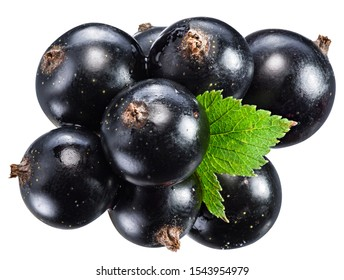 Ripe black currant branch with green leaf on the white background. File contains clipping paths.