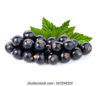 Ripe black currant isolated on white background