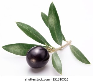 Ripe black olive with leaves on a white background.