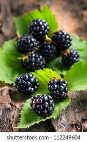 Ripe blackberries on bark in the forest