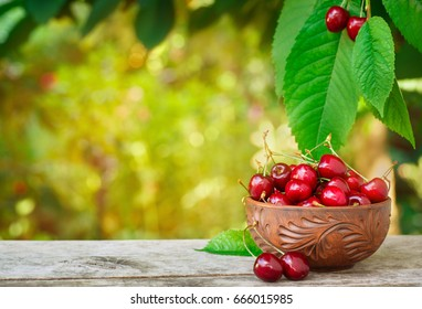 ripe cherries in bowl on wooden table with sunshine tree on the background. Fresh summer berries