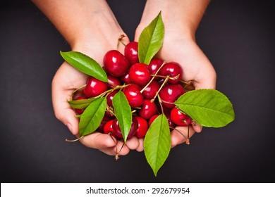 Ripe cherries in hands on dark background