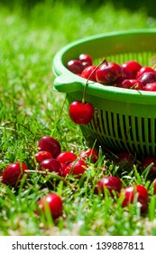 Ripe cherry is lying on the grass and green basket