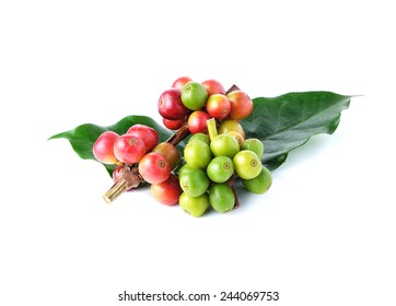 ripe coffee isolated on white background