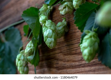 Ripe cones of hops lie on a wooden table.