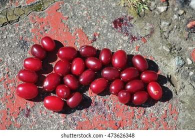Ripe cornel cherries on stony floor. Foot concept.