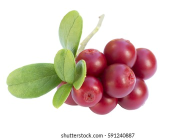 ripe cowberries - cranberries on a white background with leaves and a sprig