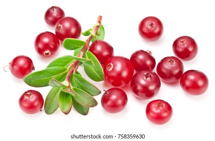 Ripe cranberries and cranberry green leaves on the white background.