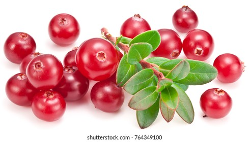 Ripe cranberries and green cranberry branch on the white background.